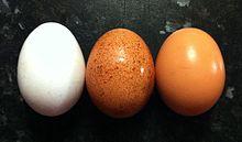 220px-Egg_colours