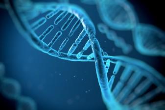 DNA-photo1-337x224